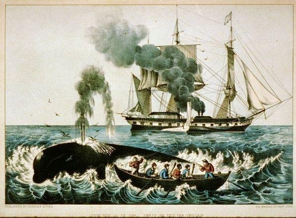Yankee Whaling